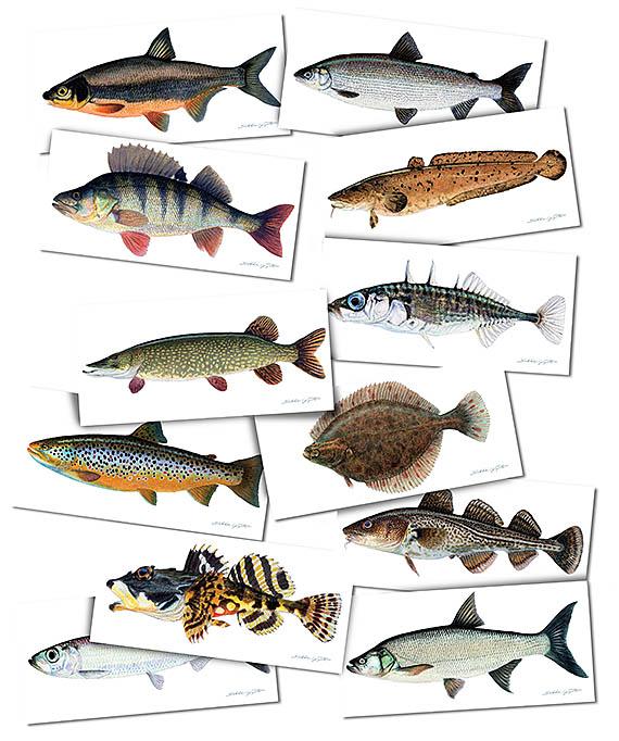 seksitarinat kalat ja skorpioni